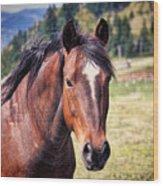 Beautiful Bay Horse In Pasture Wood Print