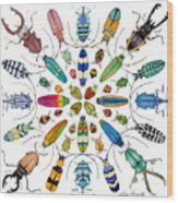 Beautiful Beetles Wood Print