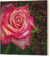 Beautiful Bicolor Rose Wood Print