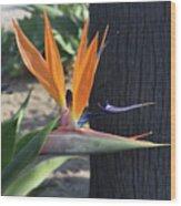 Beautiful Bird Of Paradise Flower In Full Bloom  Wood Print