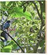 Beautiful Bird Perched In A Tree Wood Print
