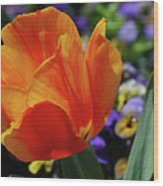 Beautiful Blooming Orange And Red Tulip Flower Blossom Wood Print