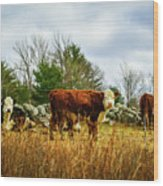 Beautiful Bovine 1 Wood Print