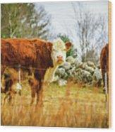 Beautiful Bovine 2 Wood Print