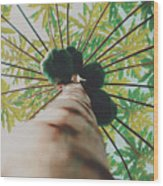 Beautiful Branches And Leaves Of Papaya Tree Along With The Tasty Exotic Fruit Fill The Frame Wood Print