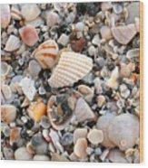 Beautiful Broken Shells Wood Print
