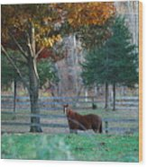 Beautiful Brown Horse Wood Print