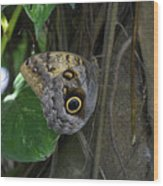 Beautiful Brown Morpho Butterfly In A Lush Garden  Wood Print