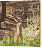 Beautiful Buck Deer In The Pike National Forest Wood Print