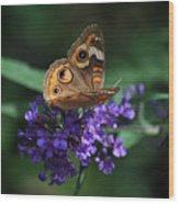 Beautiful Buckeye Wood Print