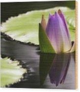 Beautiful Bud Reflection Wood Print