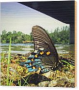 Beautiful Butterfly At The River II Wood Print