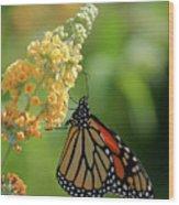 Beautiful Butterfly Wood Print