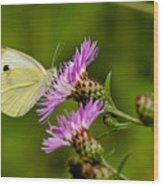 Beautiful Butterfly On Pink Thistle Wood Print