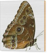 Beautiful Butterfly Wings Of Meadow Brown Isolated Wood Print
