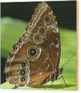 Beautiful Butterfly Wings Of Meadow Brown Wood Print