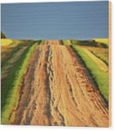 Beautiful Colors Along A Saskatchewan Country Road Wood Print