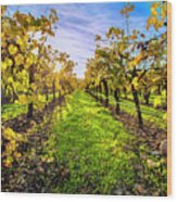 Beautiful Colors On The Vines Wood Print