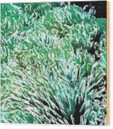 Beautiful Coral Reef 2 Wood Print