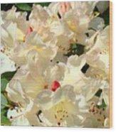 Beautiful Creamy White Pink Rhodies Floral Garden Baslee Troutman Wood Print