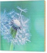 Beautiful Dandelion Wood Print
