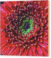Beautiful Details Of Gerbera Daisy Wood Print