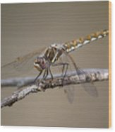 Beautiful Dragonfly Wood Print