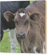 Beautiful Face Of A Brown Calf Wood Print