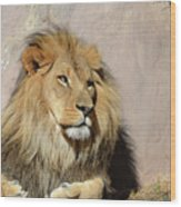 Beautiful Face Of A Lion In The Warm Sunshine Wood Print