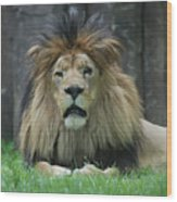 Beautiful Face Of A Male Lion With A Thick Fur Mane Wood Print