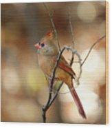 Beautiful Female Cardinal Wood Print