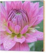 Beautiful Flower In Daybreak Wood Print