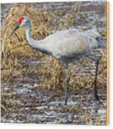 Beautiful Day For A Walk -sandhill Crane   Wood Print