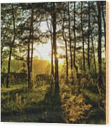 Beautiful Forest At Sunrise Wood Print