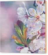 Beautiful Fruit Tree Blooming Wood Print