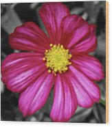 Beautiful Fuchsia Flower Wood Print