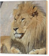 Beautiful Golden African Lion Relaxing In The Sunshine Wood Print