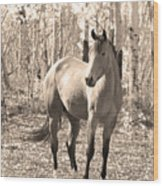 Beautiful Horse In Sepia Wood Print