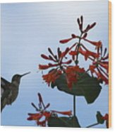 Beautiful Hummingbird Wood Print