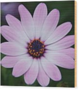 Beautiful In Pink Today Wood Print