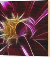 Beautiful Insight Of A Dahlia Wood Print