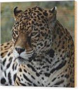 Beautiful Jaguar Portrait Wood Print