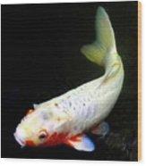 Beautiful Koi Fish Wood Print