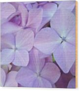 Beautiful Lavender Purple Hydrangea Flowers Baslee Troutman Wood Print