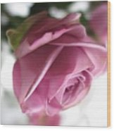 Beautiful Lavender Rose 2 Wood Print
