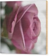 Beautiful Lavender Rose 3 Wood Print