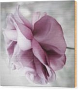 Beautiful Lavender Rose Wood Print