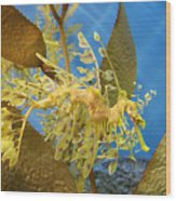 Beautiful Leafy Sea Dragon Wood Print by Brooke Roby