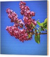 Beautiful Lilac Wood Print