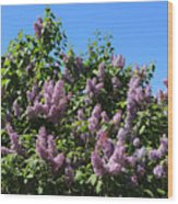 Beautiful Lilacs Day Wood Print